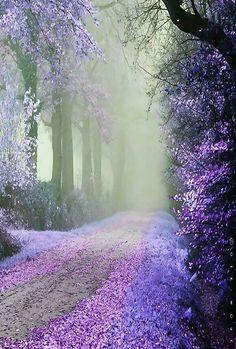 The beautiful path to heaven.