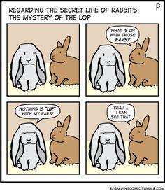 Lop rabbits are sassy