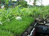 屋上菜園システム