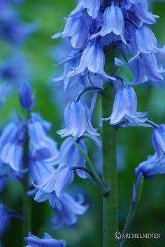 Beautiful of Blue by Ari Helminen, via Flickr