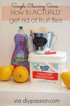 How to actually get rid of fruit flies! via diypassion.com