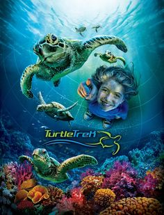 From a turtle's point of view, go on the epic journey with TurtleTrek to see the challenges and hardships faced to survive and make it back to the beach where you were hatched.