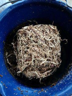 Wet your Sphagnum Moss.