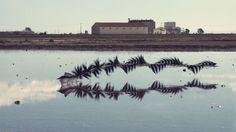 まるで数学的な美しさ。鳥の羽ばたく「軌跡」を捉えた連続写真 - まぐまぐニュース!