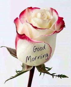 47 fantastiche immagini su Good Morning ♥  56b29f5961b