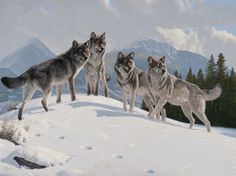 MESSAGE ON THE WIND - wolf painting by Al Agnew