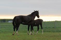 Nursing foal, Lancaster County
