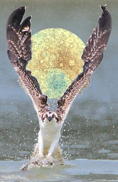Osprey saving the moon - this image of the moon shows the uranium deposits, made by high definition satellite & camera (why do we need to know where they are????)