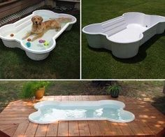 Dog Bone Pool