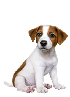 Trendy Dogs And Puppies Jack Russell Animals 56 Ideas Cute Puppies, Dogs And Puppies, Cute Dogs, Dog Wallpaper, Animal Wallpaper, Cute Animal Drawings, Cute Drawings, Benfica Wallpaper, Animals And Pets