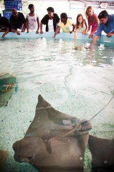 Ray Touch Pool at Mystic Aquarium.   Credit: Ryan Donnell