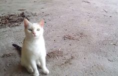 Minki the Cat Stray No More! This Will Touch Your Heart!