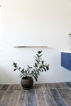 On the Ball Bathrooms are specialist in providing bathroom renovations to Perth. Perth Bathrooms renovations for over 20 years and are the waterproofing experts Bathroom Renovations Perth, Timber Tiles, Bathroom Tapware, Stone Bathtub, Blue Vanity, Wall Hung Vanity, White Subway Tiles, Bathroom Plants, Bathroom Trends