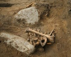 Buccaneer bones: Possible pirate skeleton found under Scotland schoolyard | Fox News