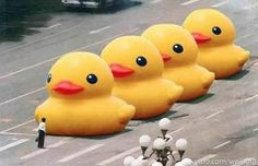 China bans all internet searches for 'big yellow duck' as part of Tiananmen Square anniversary clampdown after prankster substitutes ducks for tanks in viral image. Why China is banning 'big yellow ducks' on the anniversary of Duck Search, Big Duck, Duck Duck, Duck Art, Chinese Social Media, Big Yellow, Colour Yellow, Montage Photo, Political Memes