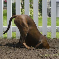landscaper #dog