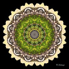 Mandala ''Moos'' von KreativesbyPetra #kreativesbypetra #Mandala #mandalaart #Natur #nature #fotografie #photography #naturfotografie #naturephotography #makro #macro #makrofotografie #macrophotography #Spiegelung #Spiegelungen #abstrakt #Abstract #Reflexion #adobephotoshop #photoshop #canon #farben #colours #Leinwand #canvas #moos Mandala Art, Adobe Photoshop, Petra, Canon, Decorative Plates, Home Decor, Mandalas, Macro Photography, Macros