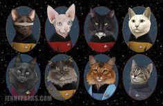 Blog dos Piscianos: Hoje é o dia mundial dos gatos.  Sem essa de dispu...