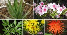 Plantas que podem ser cultivadas em casa e que funcionam como purificadores de ar