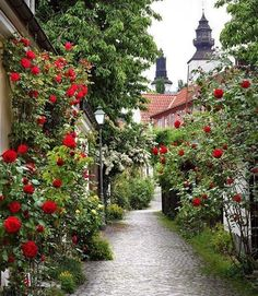 #red roses