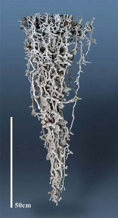 aluminium cast of ants nest - Google Search