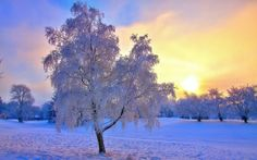 Download Beautiful Tree In Winter HD Desktop Wallpapers From High Quality Resolution For Your Widescreen Background