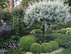 How To Garden With Clay Soil - Caroline Benedict Smith Steep Gardens, Back Gardens, Outdoor Gardens, Deciduous Trees, Trees And Shrubs, Clay Soil Plants, Smith Gardens, Baumgarten, Pyrus
