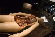 Wax model with foetus in the womb.