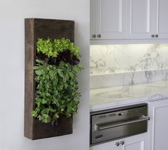 Indoor Garden (via @BrightNest) with tons more vertical garden ideas! @Jenna Nelson Jarrett (white counters and marble)