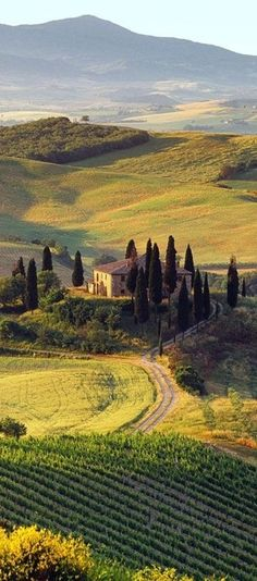 Villa I Pini near the medieval town of San Gimignano in Tuscany, Italy
