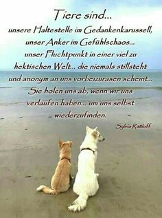 animals are the better humans - Lustige Tiere Hund - Animals And Pets, Funny Animals, Cute Animals, Post Animal, My Animal, I Love Dogs, Cute Dogs, Motivacional Quotes, Tattoo Quotes