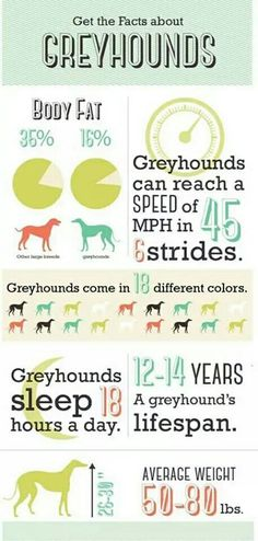Greyhound Facts....