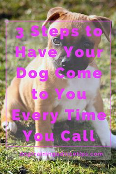 3 Steps to Have Your Dog Come to You Every Time You Call   Dog Training Tips   Dog Obedience Training   Dog Training Commands   Dog Training Recall   http://www.dogtrainingadvicetips.com/basic-dog-training-3-steps-dog-come-every-time-call