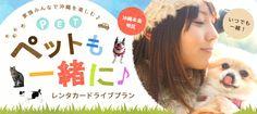 【沖縄本島地区】家族みんなで沖縄を楽しむ♪ペットも一緒にレンタカードライブプラン Pop Design, Graphic Design, Banner Design, Campaign, Layout, Pets, Poster, Page Layout, Billboard