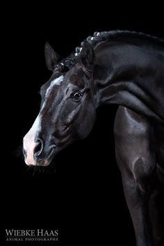 "equinecanada: "" Wiebke Haas | animal photography """
