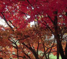 Here is one of my favorite images of autumn! I took this photo in Portland, Oregon in the Hollywood District where tree lined streets fill the area with beauty.