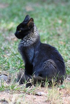 Post with 4256 votes and 177410 views. Tagged with cats, warriors, warrior cats; Pretty Cats, Beautiful Cats, Animals Beautiful, Cute Baby Animals, Animals And Pets, Funny Animals, Funny Horses, Warrior Cats, Woman Warrior