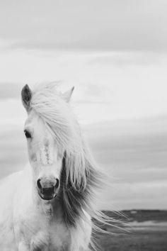 #beautifulhorse