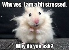 As I have said before, everyone stresses; it is the nature of being alive. Right now one book that I highly recommend is The Stress of Life by Hans Seyle . | Ark of Wellness http://blog.arkofwellness.com/your-body-your-mind-stress-and-your-health-2/