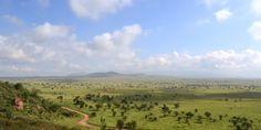 Ten thousand years ago, the Sahara looked more like the African savanna, seen here.