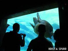 South Africa trip journal: Under the sea at Durban's uShaka Marine World Trip Journal, Durban South Africa, Sea World, Greatest Adventure, Ocean Life, Snorkeling, Scuba Diving, Under The Sea, Aquarium