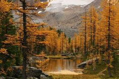 Larch Valley, Banff National Park. This is an amazing hike in the fall.