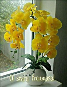 Flower Art Images, Orchid Images, Flower Arrangements Simple, Orchid Arrangements, Orchids In Water, Indoor Orchids, Amaryllis, Yellow Orchid, Growing Orchids