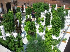 Grow vegetables, fruits, herbs and flowers indoors or outdoors. Tower garden uses aeroponics in a vertical garden so you can grow your own produce quickly and easily—no green thumb required. Aeroponic System, Hydroponics System, Hydroponic Gardening, Organic Gardening, Urban Gardening, Vertical Hydroponics, Hydroponic Lettuce, Tower Garden, Balcony Garden