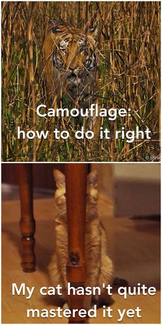 Camouflage - the right and the wrong way