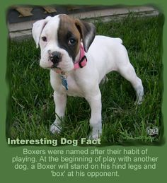 Interesting Dog Facts