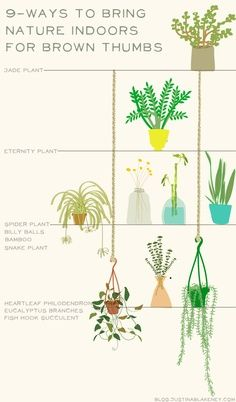 9ways to bring nature indoors for brown thumbs