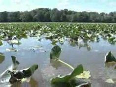 BPS Bass in the Grass Tips on Fishing Aquatic Vegetation (Kevin Van Dam)