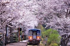 Blossoming Station by Minoru Matsumura on 500px