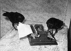 """""""Huginn and Muninn set about composing their memoirs.""""  Photo by Peter Stackpole, circa 1939  [From the LIFE Magazine Photo Archive]"""